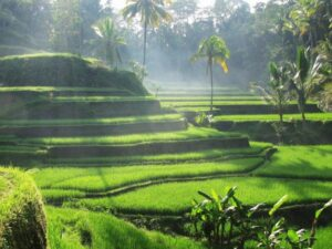 4Days 3Nights Romantic Bali Honeymoon Tour Package