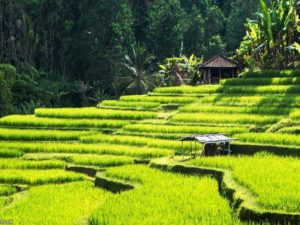 4Days 3Nights Bali Free and Easy Tour Package